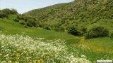 مراتع منطقه خولشکوه